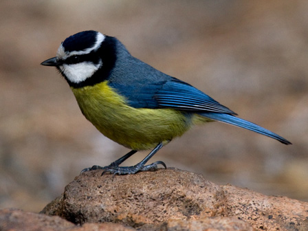 Birds Of La Palma Canary Islands