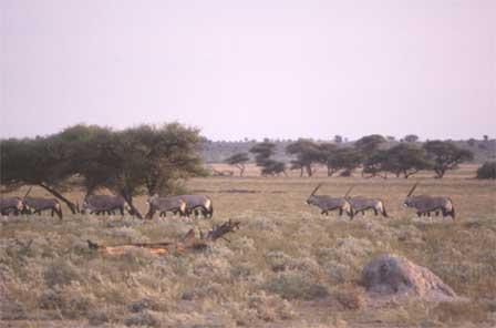 Botswana_Central_Kalahari