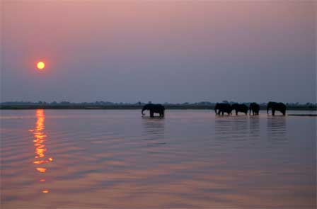 Chobe_River_Botswana_Elephants