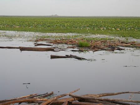 Lake_Darkoye_Burkina_Faso
