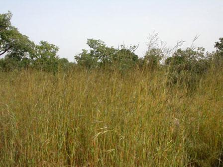 Savanna_Burkina_Faso