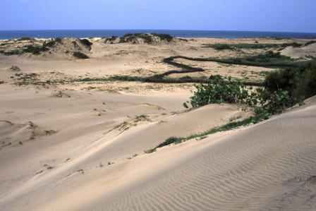 Sand_Dunes_Maio_Cape_Verde