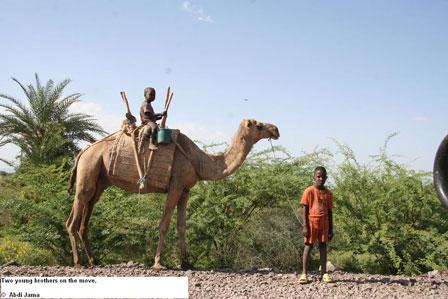 Djibouti_Camels