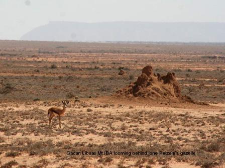 Gacan_Libaax_Somalia