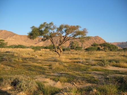 Bouhedma_National_Park_Tunisia