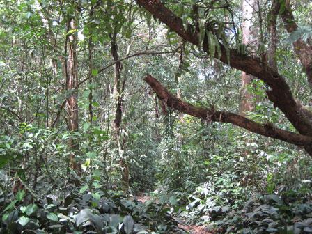 TerraVilla_Gardens_Farm_Liberia