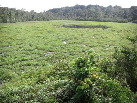 Mbeli_Bai_Noambali_National_Park_Congo