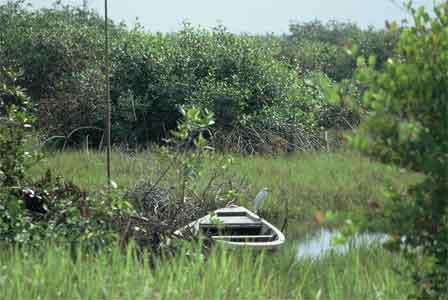 Mangrove_Swamps_Nigeria