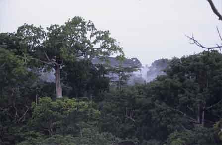 Nigeria_Okomu_National_Park