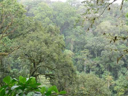 Obo_National_Park_São_Tomé