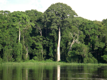 Sangha_River_Congo