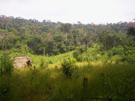 Sierra_Leone_Gola_Forest