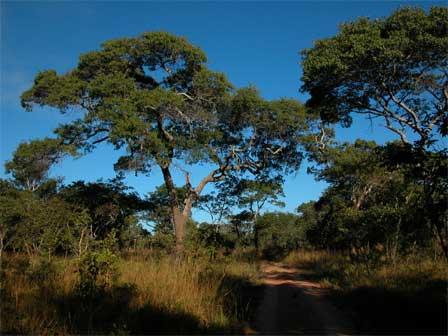 Miombo_Habitat_Zambia