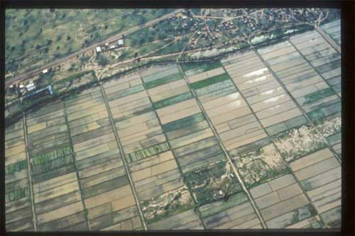 Rice_fields_from_the_air_Niger