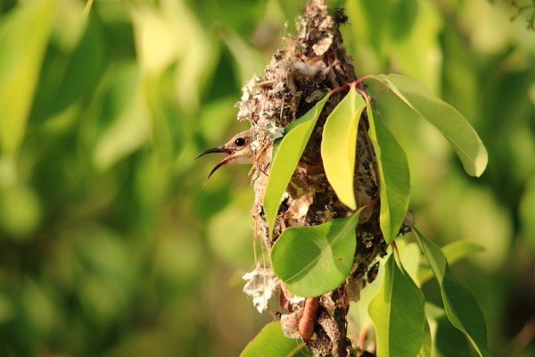 beautiful sunbird in nest
