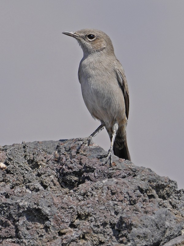 Sombre Rock Chat