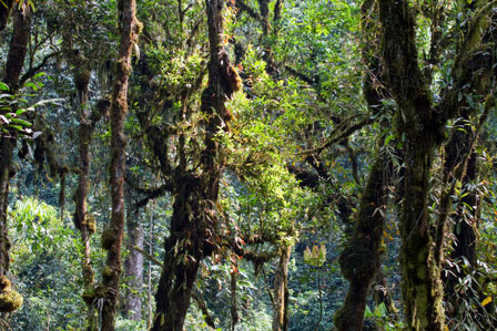 Nyungwe_Forest_Rwanda