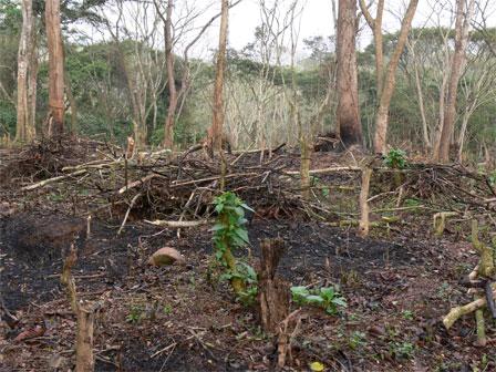 Kumbira_Forest_Angola