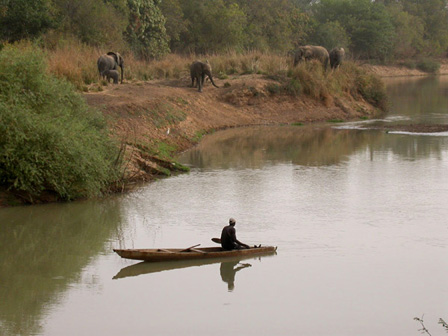 Elephants_along_Mouhoun_River_Burkina_Faso