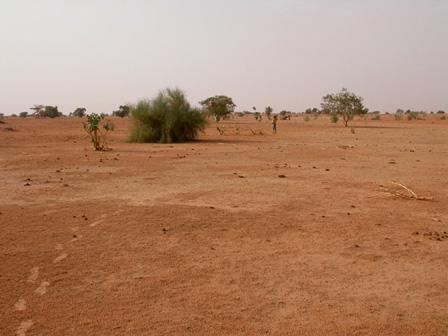 Sahelian_Steppe_Burkina_Faso