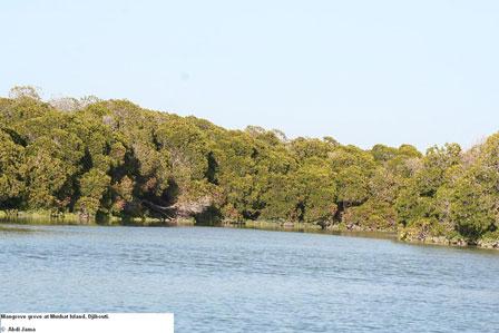 Djibouti_Mangroves