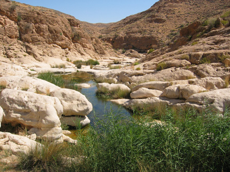 Bouhedma_National_Park_Tunisia