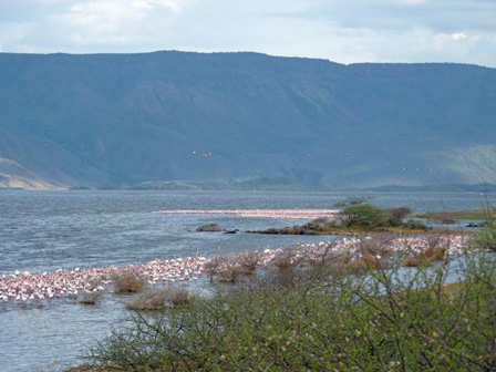 Flamingos_Lake_Baringo_Kenya