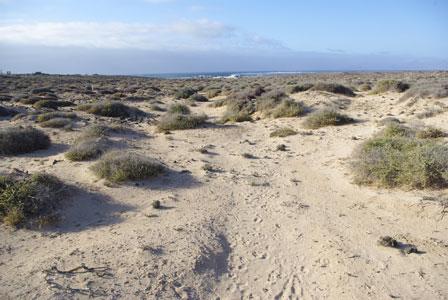 Majanicho_sand_plain_Fuerteventura