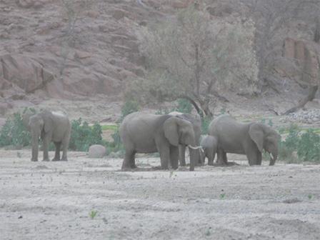 Desert_African_Elephants_Namibia