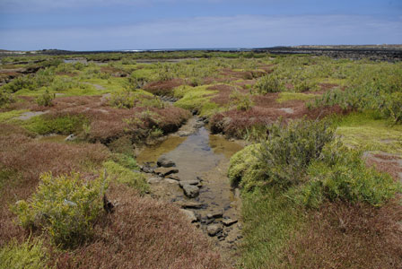 Saltmarshes-of-La-Santa-(La