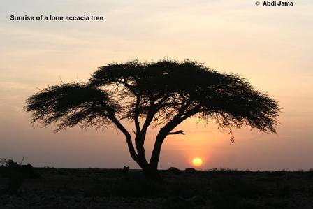 Somalia_Sunrise