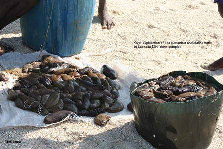 Somalia_Sea_Cucumbers