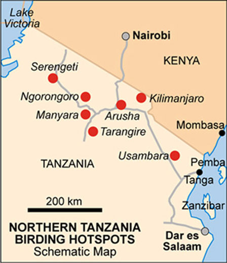 Tanzania_Birding_Hotspots