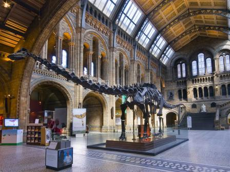 Picture  © Natural History Museum